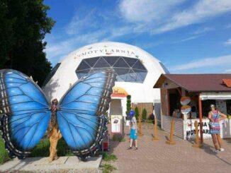 Motylarnia - Schmetterlinge hautnah erleben 🇵🇱 Ausflugsziele