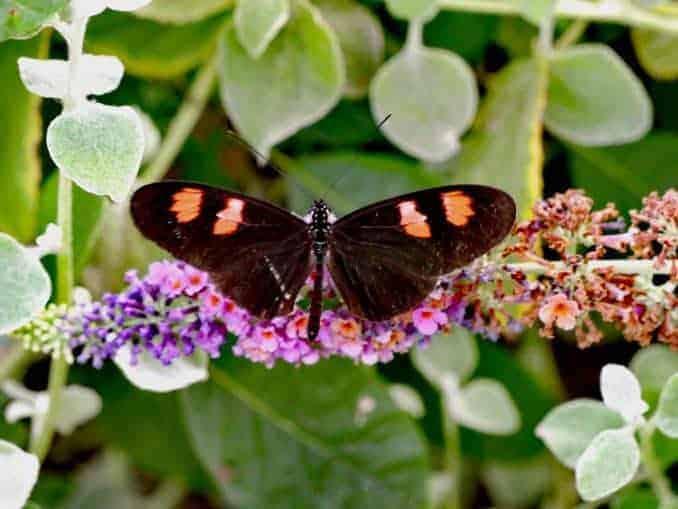 Motylarnia Schmetterlinge Polnische Ostsee (1)
