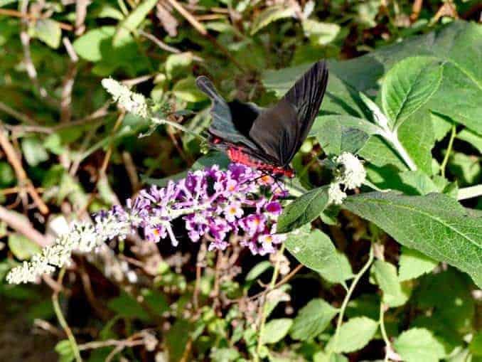 Motylarnia-Schmetterlinge-Polnische-Ostsee (17)