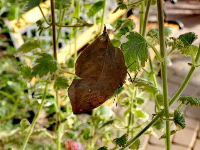 Motylarnia-Schmetterlinge-Polnische-Ostsee (18)