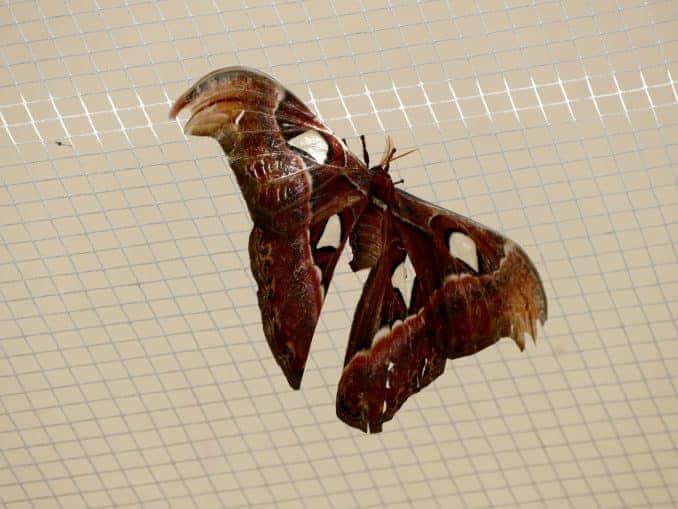 Motylarnia-Schmetterlinge-Polnische-Ostsee (25)
