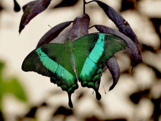 Motylarnia-Schmetterlinge-Polnische-Ostsee (26)