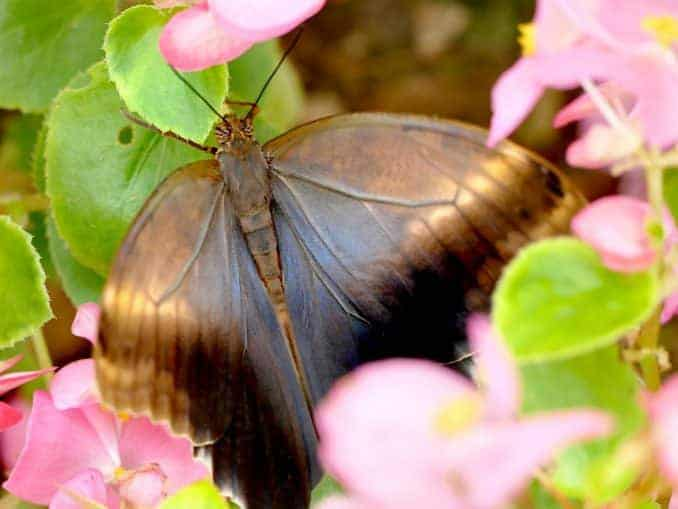 Motylarnia-Schmetterlinge-Polnische-Ostsee (27)