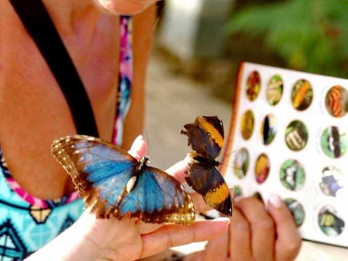Motylarnia-Schmetterlinge-Polnische-Ostsee (3)