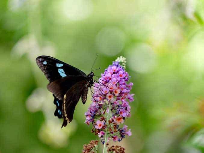 Motylarnia-Schmetterlinge-Polnische-Ostsee (32)