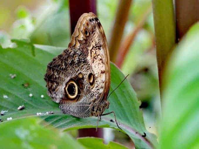 Motylarnia-Schmetterlinge-Polnische-Ostsee (35)