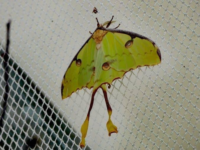 Motylarnia-Schmetterlinge-Polnische-Ostsee (36)
