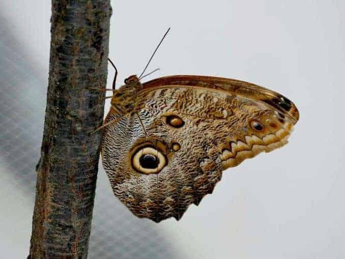 Motylarnia-Schmetterlinge-Polnische-Ostsee (37)