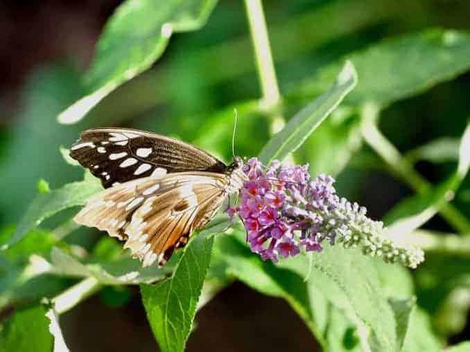 Motylarnia-Schmetterlinge-Polnische-Ostsee (38)