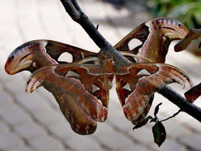 Motylarnia-Schmetterlinge-Polnische-Ostsee (39)