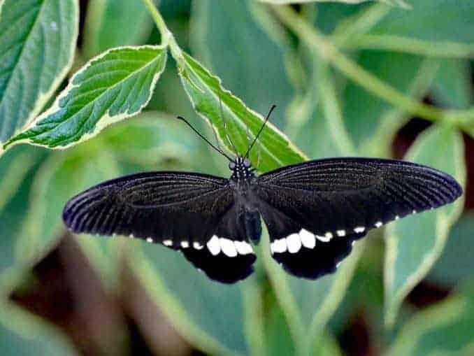 Motylarnia-Schmetterlinge-Polnische-Ostsee (41)