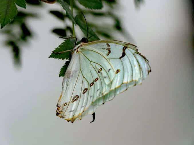 Motylarnia-Schmetterlinge-Polnische-Ostsee (42)