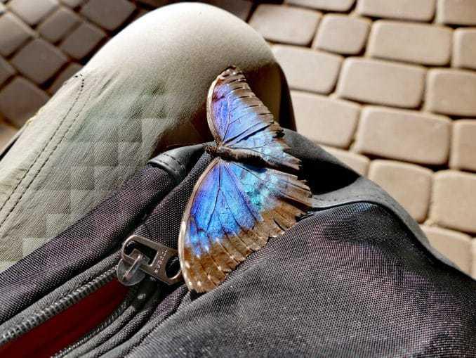 Motylarnia-Schmetterlinge-Polnische-Ostsee (5)