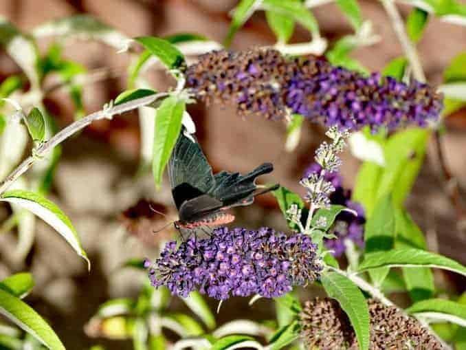 Motylarnia-Schmetterlinge-Polnische-Ostsee (50)