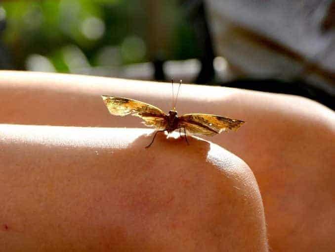 Motylarnia-Schmetterlinge-Polnische-Ostsee (6)