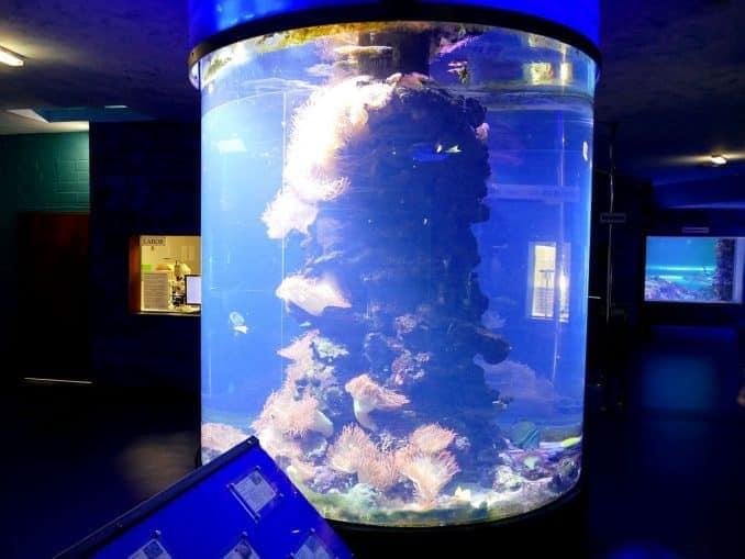 Aquarium auf Fehrmarn