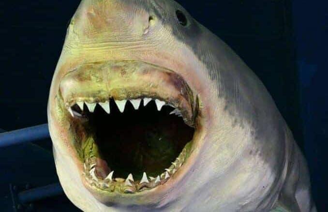 Hai im Meereszentrum Fehmarn