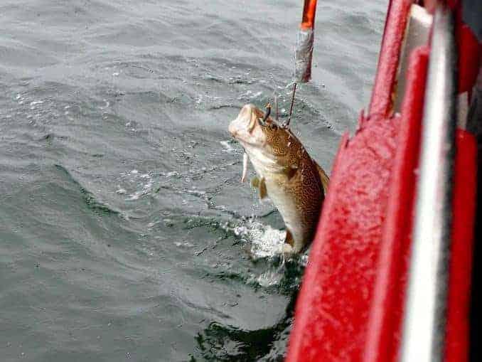 Fisch am Harken – Hochseeangeln Heiligenhafen