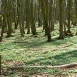 Wald auf der Insel Rügen