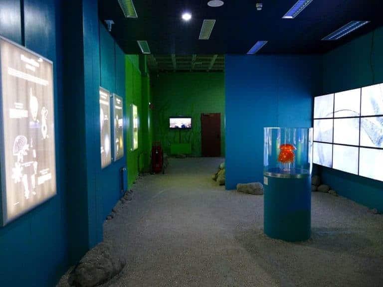 ostsee-erlebniswelt-aquarium-ausstellung-020