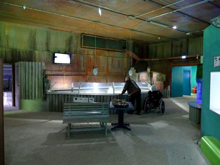 ostsee-erlebniswelt-aquarium-ausstellung-023