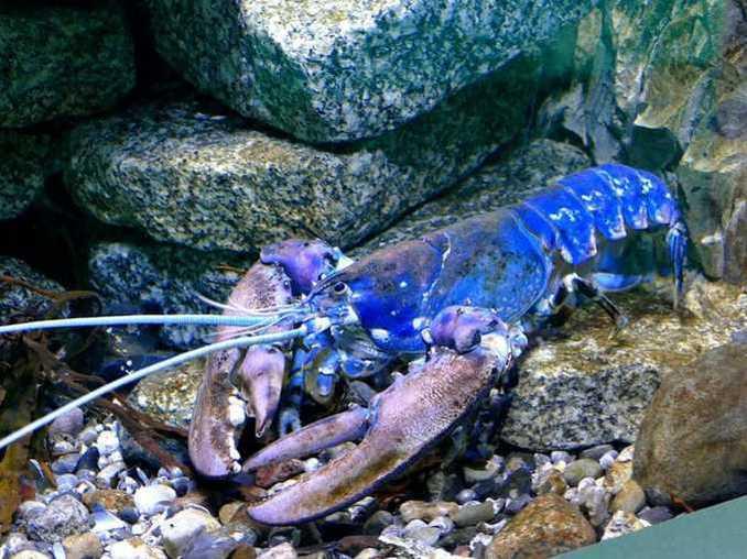 ostsee-erlebniswelt-aquarium-ausstellung-024