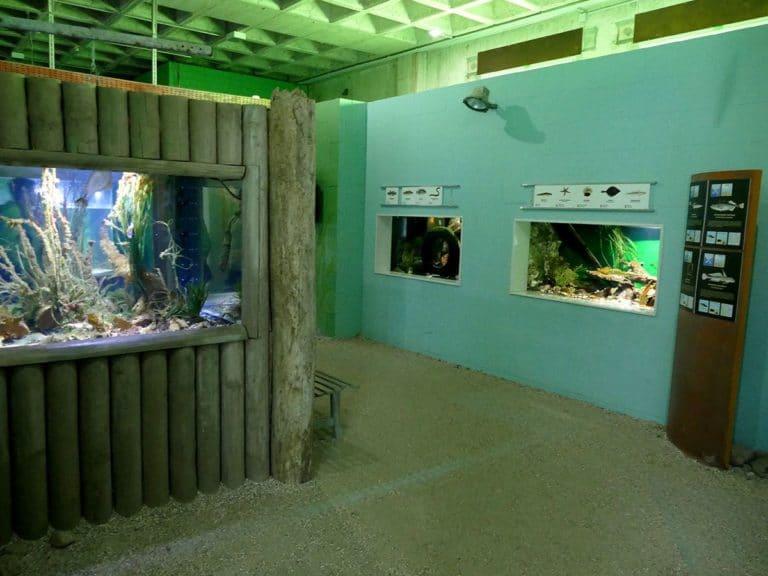 ostsee-erlebniswelt-aquarium-ausstellung-026
