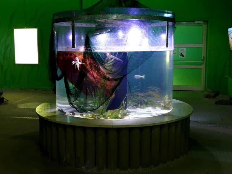 ostsee-erlebniswelt-aquarium-ausstellung-028