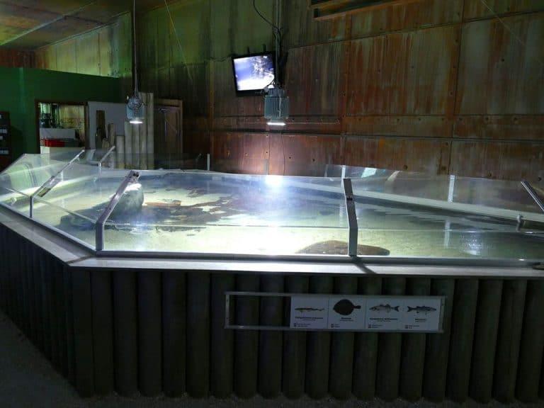 ostsee-erlebniswelt-aquarium-ausstellung-030