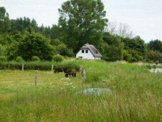 Ostsee Urlaub in Putbus auf Rügen 🇩🇪 Urlaubsorte