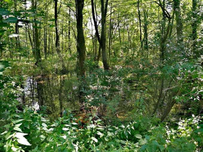 Wasserspiegelungen vom ekopark in Kolberg