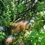 Ekopark Wschodni Kolberg 🇵🇱 Ausflugsziele