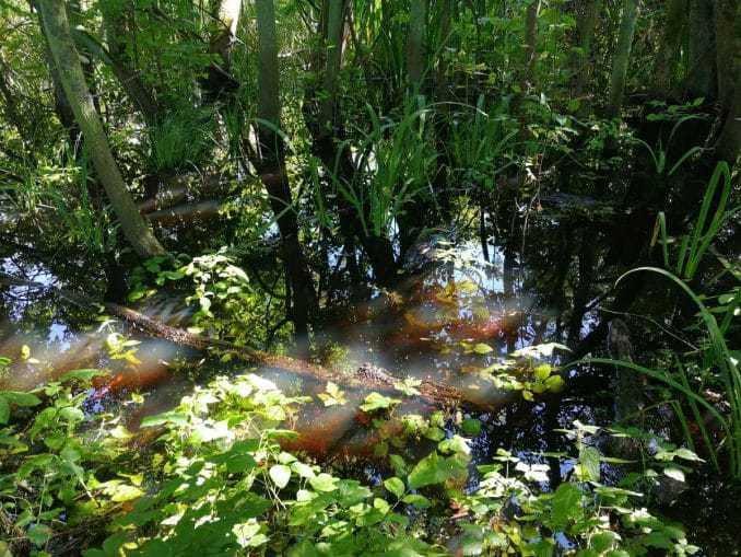 Sumpflandschaft im Ekopark Wschodni Kolberg