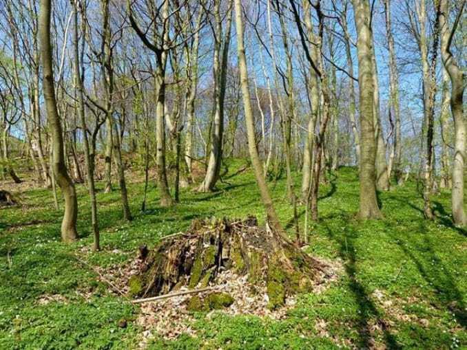 Jagdschloss Granitz – Natürlicher Wald am Jagdschloss