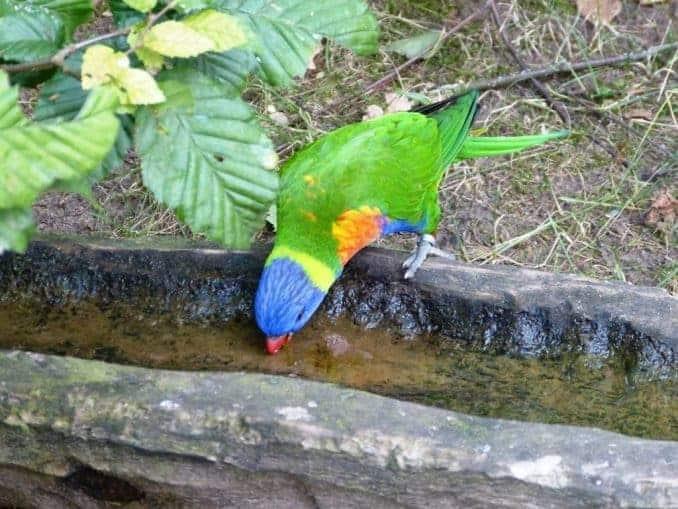 Vogelpark-Marlow-Bild-001
