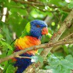 Vogelpark-Marlow-Bild-002-150x150 Vogelpark Marlow 🇩🇪 Ausflugsziele