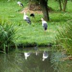 Vogelpark-Marlow-Bild-018-150x150 Vogelpark Marlow 🇩🇪 Ausflugsziele
