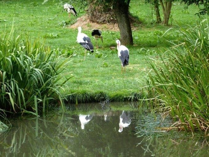 Vogelpark-Marlow-Bild-018