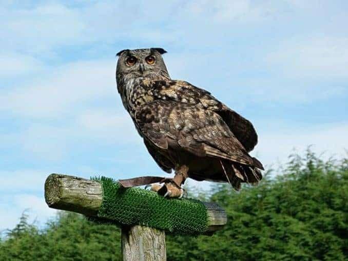 Vogelpark-Marlow-Bild-024