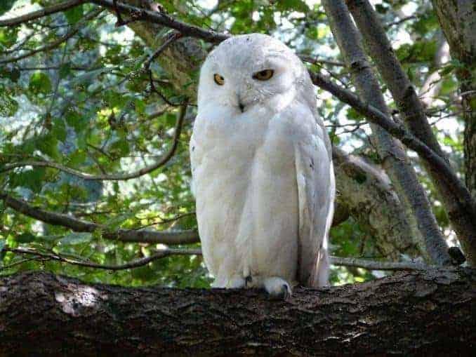 Vogelpark-Marlow-Bild-026