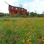 Vogelpark-Marlow-Bild-043-150x150 Vogelpark Marlow 🇩🇪 Ausflugsziele
