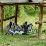 Vogelpark-Marlow-Bild-058-150x150 Vogelpark Marlow 🇩🇪 Ausflugsziele