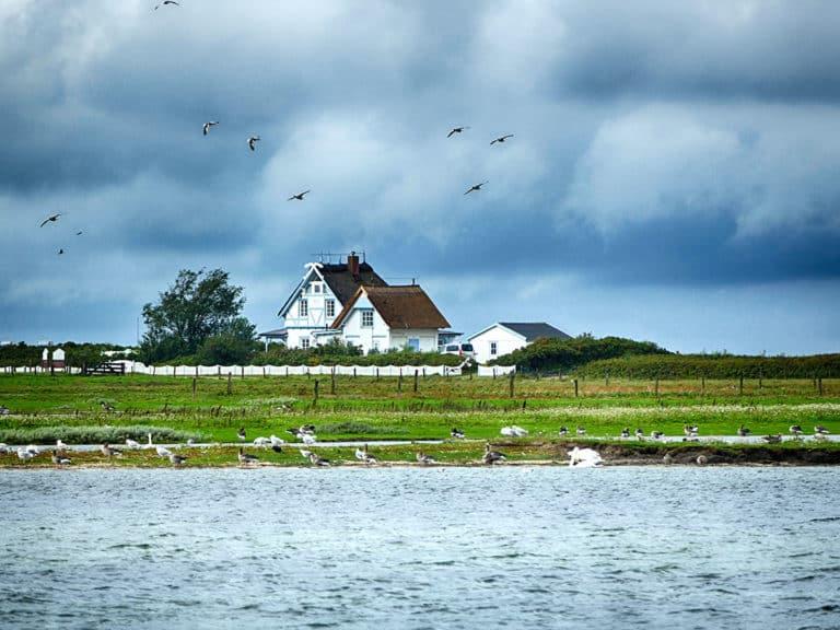 Heiligenhafen Naturschutzgebiet