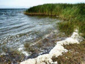 Ostsee Urlaub in Pruchten bei Zingst 🇩🇪 Urlaubsorte