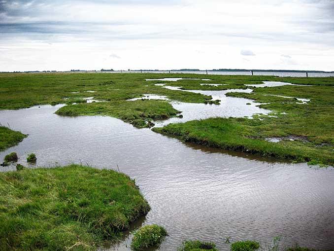 Salzwiesen sind extensiv genutzte amphibische Lebensräume. Bildquelle: Rasmus Klöpper.