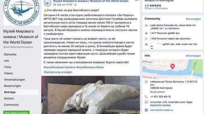 Facebook Screenshot Museum Kaliningrad Knochenfund