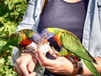 loris-papagei-vogelpark-marlow-326x245 Urlaub in Marlow mit Vogelpark 🇩🇪 Urlaubsorte