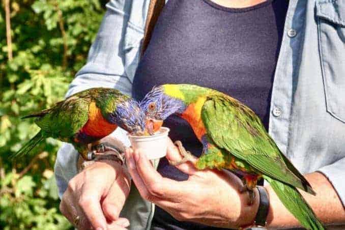 Loris Papagei Vogelpark Marlow Ostseeküste