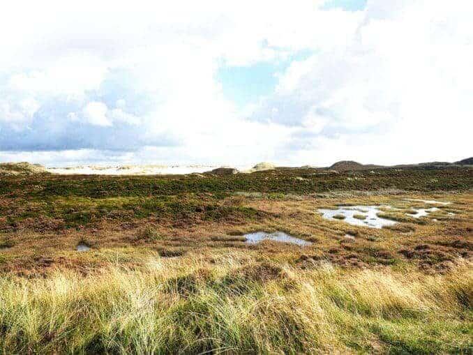 Moor an der Ostsee