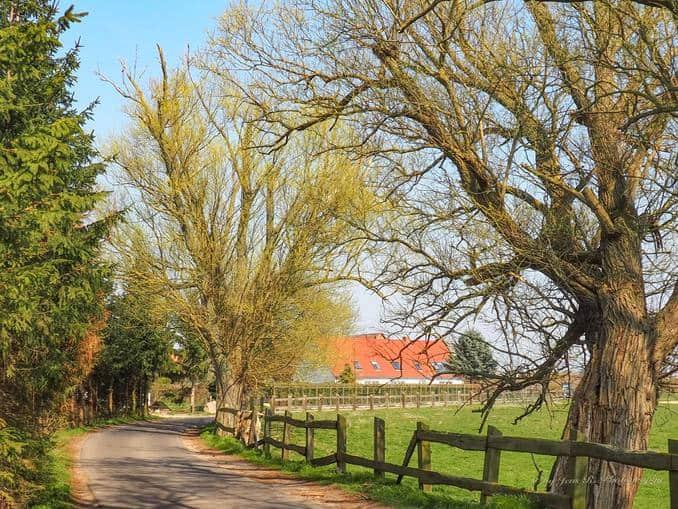 Pferdekoppel in Stolpe auf Usedom